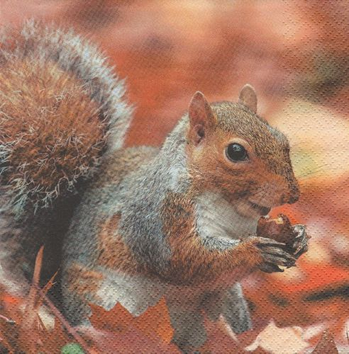 Serviette Squirrel at Autumn